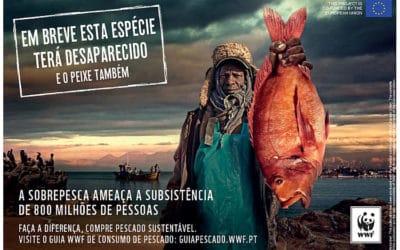 A ANP|WWF lança hoje uma nova campanha 'Em breve esta espécie terá desaparecido!….E o peixe também!'