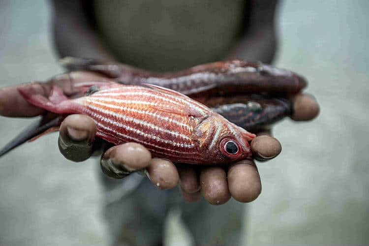 ANP|WWF traz a Portugal Georg Werner, um ambientalista da Environmental Justice Foundation (EJF)