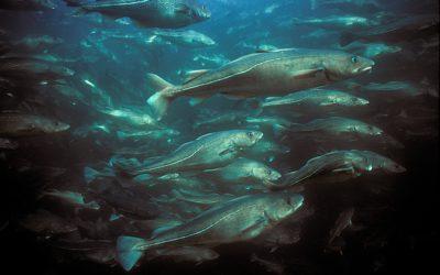 Ministrowie UE zignorowali prawo i granice wytrzymałości ekosystemu Morza Bałtyckieg