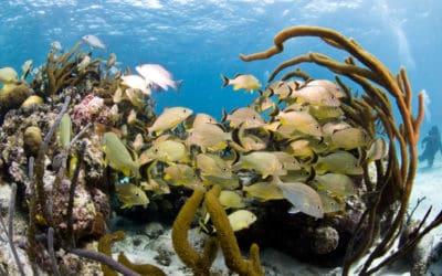 Obchody Światowego Dnia Oceanów