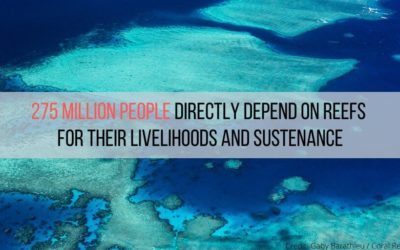 Corals and communities: EJF report highlights devastating impacts of climate crisis on reefs