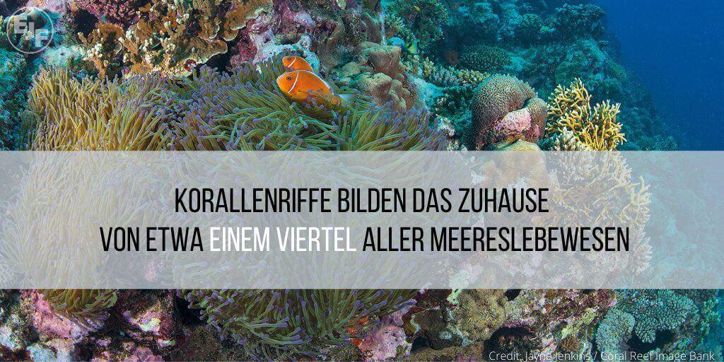 Korallenriffe in Gefahr: EJF-Bericht zeigt Auswirkungen der Klimakrise auf Riffe und Küstengemeinden