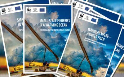 WWF-Studie: 40 Prozent weniger Fisch durch wärmere Meere